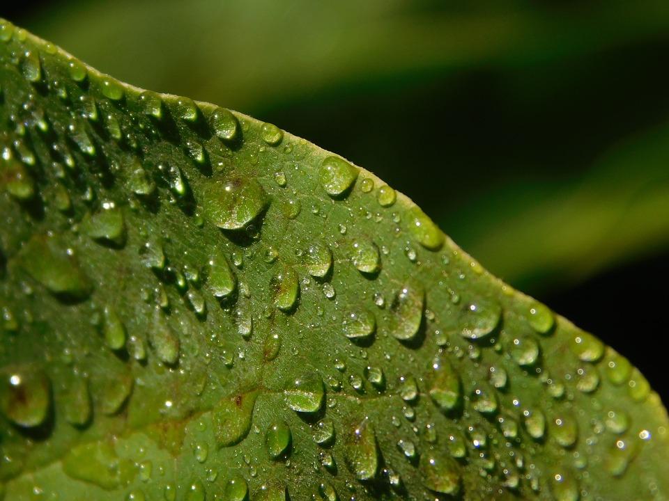 leaf-1679336_960_720